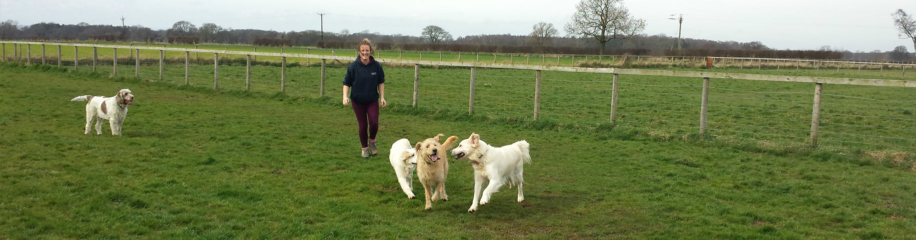 Derrings Kennels can accommodate any exercise routine your pet may need, call us for more information
