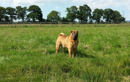 Wide open spaces for all the exercise. Derrings Kennels.