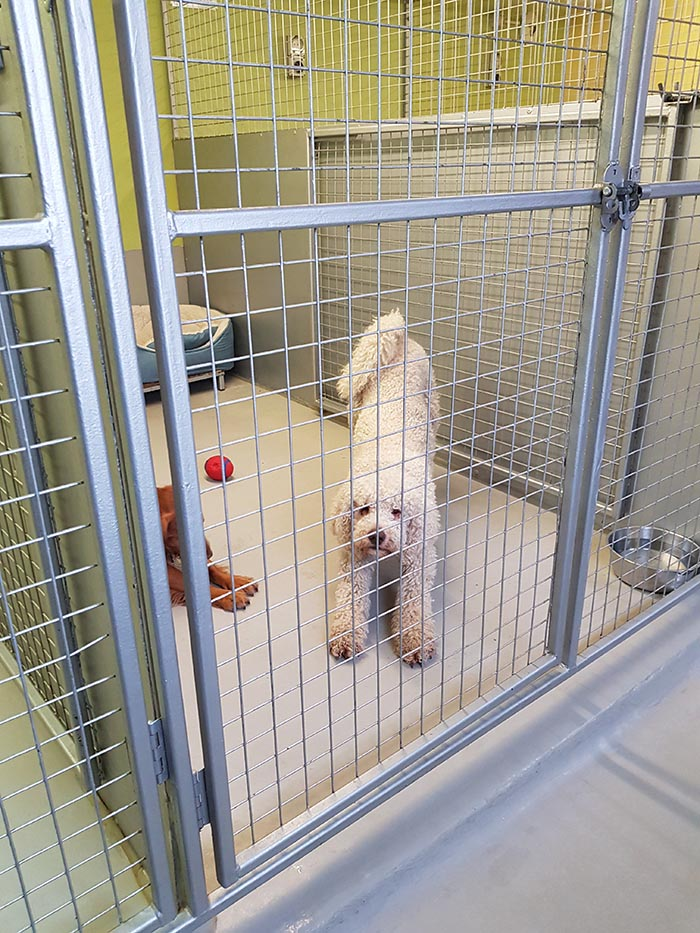 Our kennels are a secure place for you dog to stay